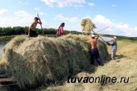 Минсельхоз Тувы проинспектирует районы, отстающие по кормозаготовке