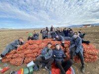 Тува: Нуждающихся в качественной местной картошке приглашают в Танды, где им вернут половину от собранных 10 мешков