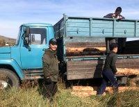 Студенты ТувГУ готовят Ботанический сад университета к зиме